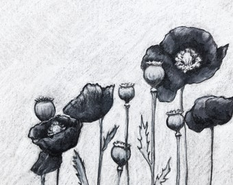 Black Poppies - Print of original drawing by Ashleyspirals