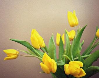 Yellow Tulips - Flowers - Print of photo