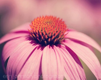 pink coneflower, nature photography, flower art, home decor, large living room wall art