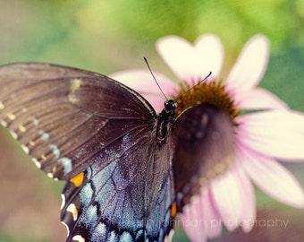 butterfly art print, blue decor, nature photography, nursery art, butterfly wings, macro, Eastern Black Swallowtail III