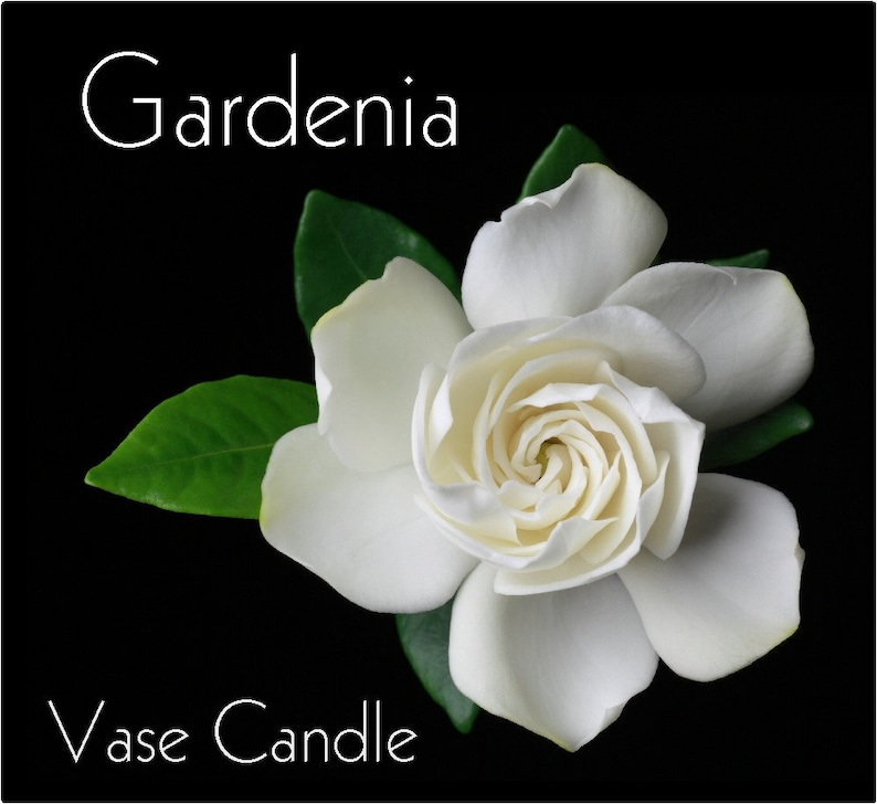 Color Free 25 Hour Premium Paraffin Soy Blend Wax Tarts Gardenia Vase Candle 2.8 oz Wax Melts Hand Poured Fresh Highly Scented