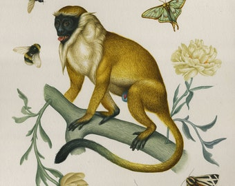 Inappropriate Tree Dweller - Giclee