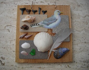 Beachcomber Collage Seagulls Sea Shells Sharks Teeth Beach Pebbles Seaside Assemblage