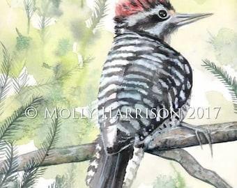Nuttall's Woodpecker Wildlife Watercolor Fine Art Print - Molly Harrison - bird, birds