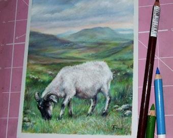 Mount Brandon Sheep original pastel painting illustration Tanya Bond Co Kerry Dingle