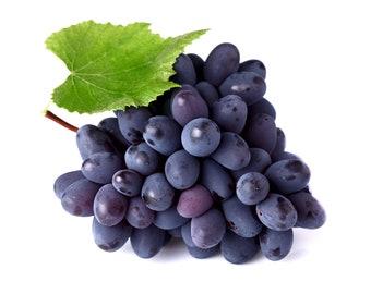 Shea Butter Lip Balm Groovy Grape Flavor  Vegan or Natural Blend