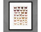 Dawn Butterflies Art Print
