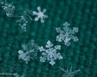 Real Snowflakes, Christmas Green, Winter's Flowers, Montana Snowflakes, Greeting Card or Art Photograph