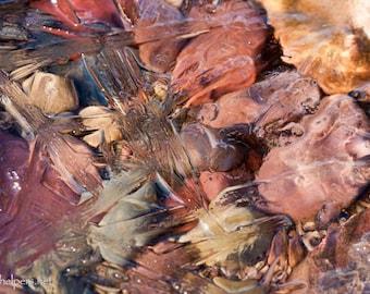 Winter Gems, Rocks under Faceted Lake Ice, Pastel Rocks, Montana Rocks, Photograph or Greeting card