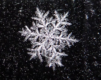 Snowflakes an Enchanting Presence in Winter Wonderland, Photographic Art Print or Greeting Card