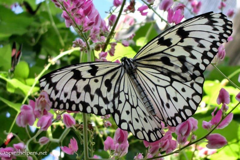 Pretty in Pink Butterfly Wings of Beauty New Beginnings take image 0