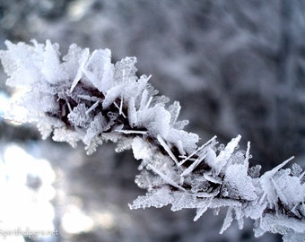 Ice Wings, Winter Fairies, Ice Stars, Winter Flowers, Fine Art Photograph or Greeting card