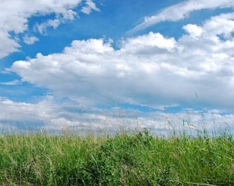 Field of Dreams, Montana Landscape, Perfect Day, Rocky Mountain Grasslands, Green Grass, Blue Sky, Photograph or Greeting card