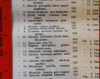 Andover Encyclopedia Galactica Suite 1500 Scientific Animal Names A-8341-L 1 Yard