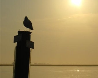 Seagull enjoying a Sunset on the Bay