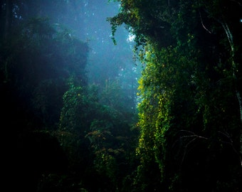 Fairytale Photography, Enchanted Forest, Magical Landscape, Foggy Landscape, Fog, Woods, Trees, Mysterious, Blue and Green