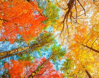 Foliage Aflame - Wisconsin - autumn photo - fall foliage image - colorful nature photography - trees - square wall art