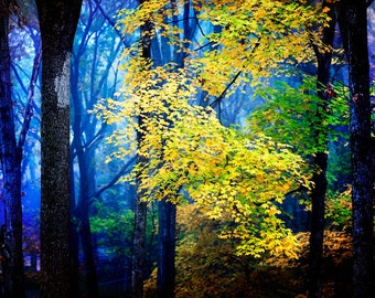 Fairytale in Blue and Yellow - Magical Woodland Photography - Autumn Trees - Misty Fog Art - Enchanted Forest - Huntsville, Alabama