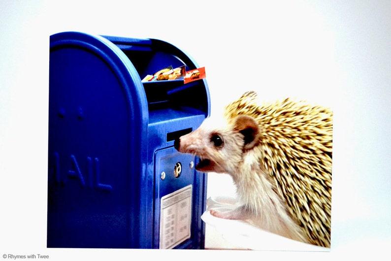 Hedgehog and Mailbox Postcard set of 2 Codex loves mail image 0