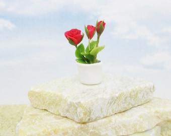 Miniature planter of roses white ceramic pot single or a pair