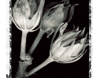 fine art photograph, black and white nature photography by Kelly Angard