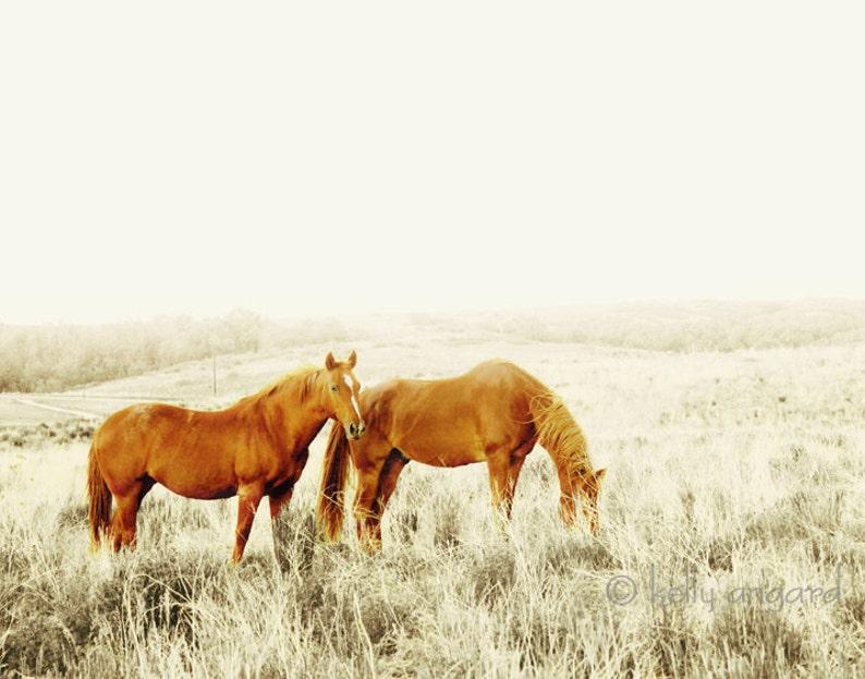 Animal photography  8x8 wild horses photo landscape image 0