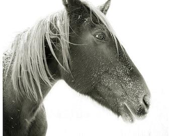 Horse Photograph, black and white horse photography, 8x8 Horse Photo, winter horse portrait, snow landscape