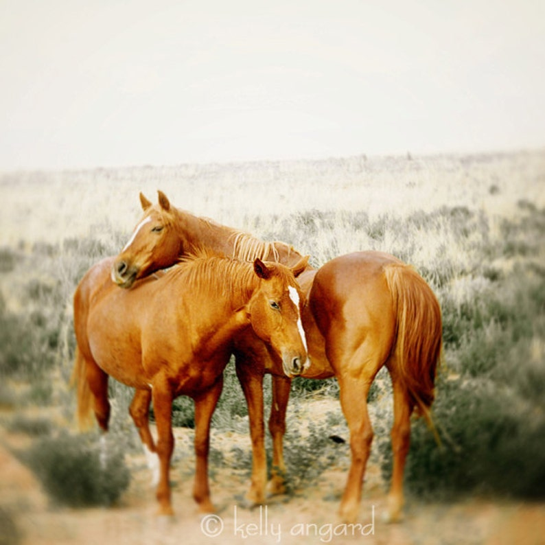 Horse photograph dreamy horse photography  wild horses image 0