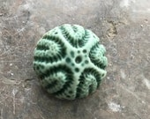 Minty turquoise sea urchin porcelain brooch