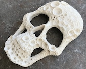 TEMPORARILY ON HOLD Large detailed Coral skull wall sculpture