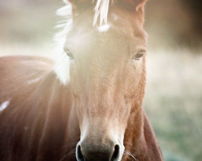 Featured listing image: Fine Art Photography  Horse Photography Equestrian Photo Archival Print Gift Under 50 Gift for Horse Lover