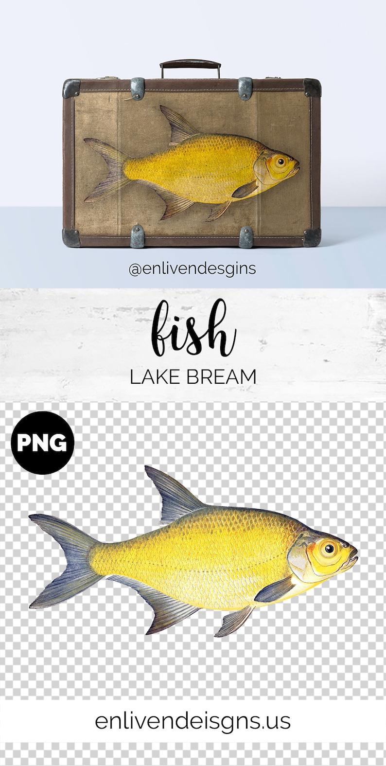 Printable Wall Art Instant Digital Download Fish Bundle Clipart