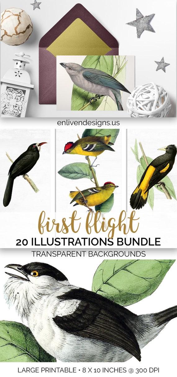Commercial Use Owl Clipart Bundle Set of 20 Illustrations Vintage Birds Printable Download