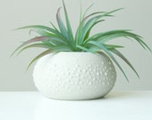 Round Ceramic Urchin Planter in Bright Green - Porcelain Sweet Pea Vessel in Bright Green