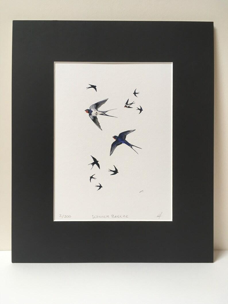 Swallow Barn Swallow fine art print image 0