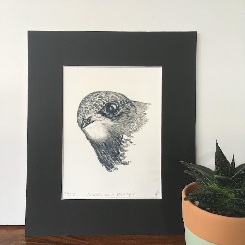 Common Swift Pencil Sketch mounted fine art print. image 0