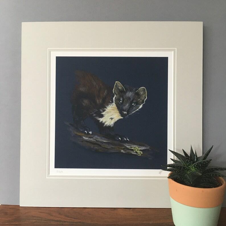 Pine Marten limited edition wildlife art print.  Scottish image 0