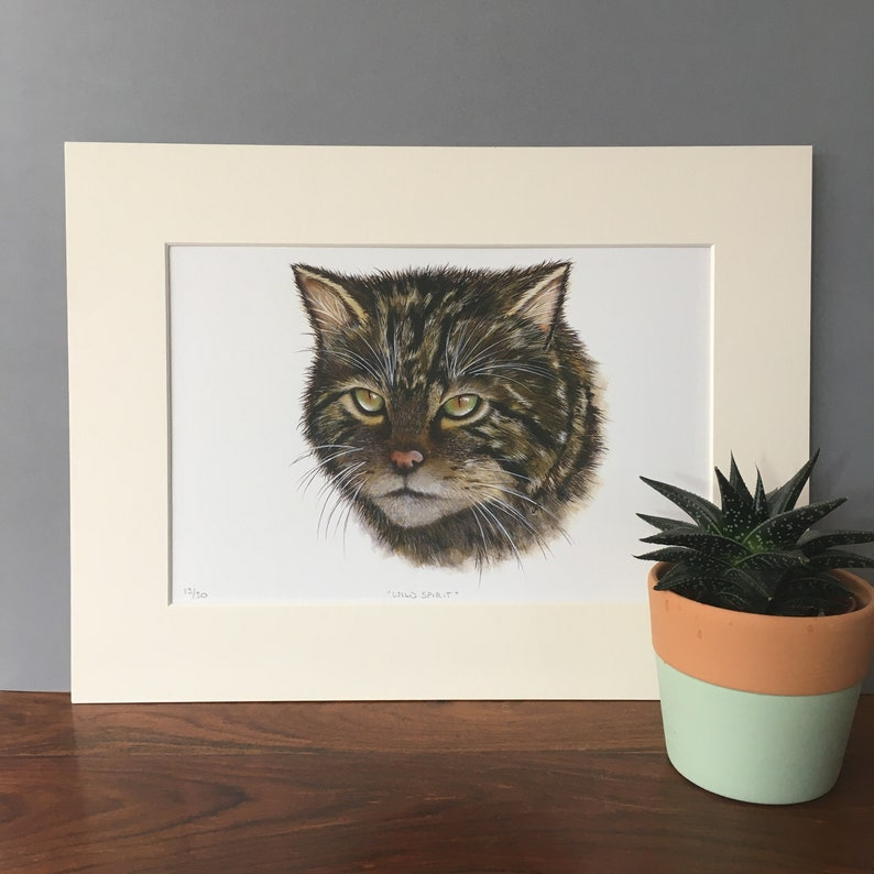Scottish Wildcat fine art giclee print.  Scottish wildlife image 0