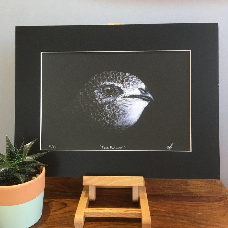 Common Swift fine art mounted print.  Wildlife art limited image 0