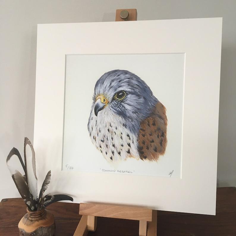 Common Kestrel mounted fine art print Birds of Prey. image 0