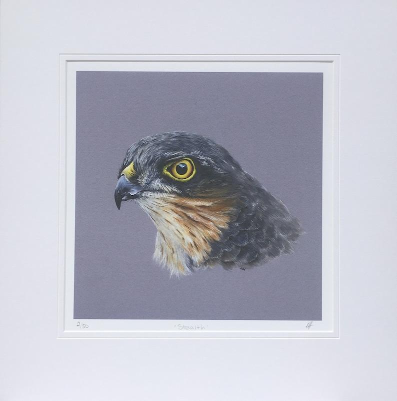 Sparrowhawk fine art print.  Wildlife art Birds of Prey image 0