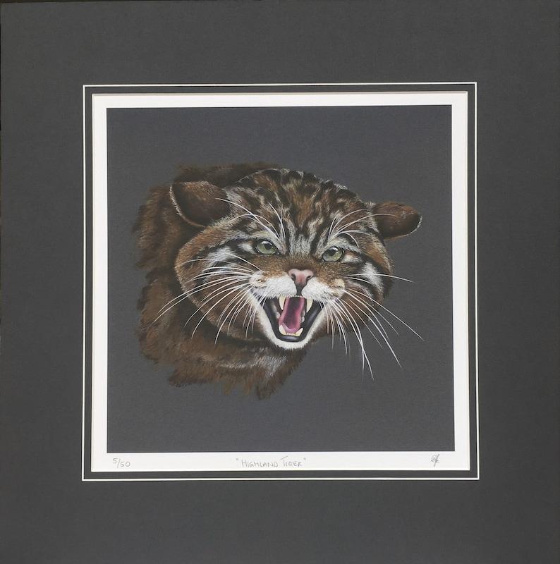 Scottish Wildcat fine art print.  Scottish wildlife. image 0