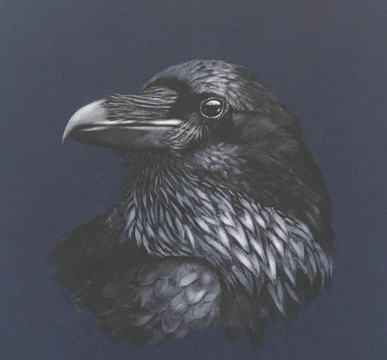 Raven Fine Art Print.  Wildlife Art Corvid British wildlife image 0