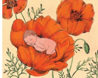 Poppies with Sleeping Baby Botanical Art Illustration Print - art print of original illustration, nature, botanical