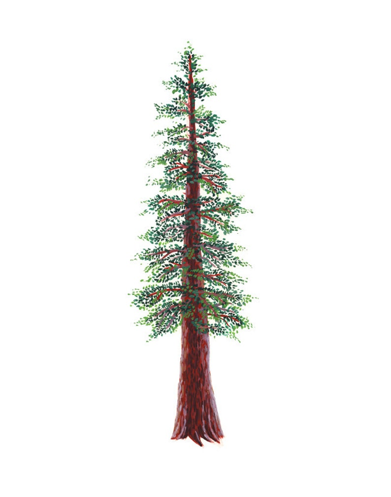 Redwood Tree Art Print   watercolor and gouache reproduction image 0