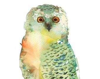 Watercolor Green Owl - painting, nature, watercolor painting, art print