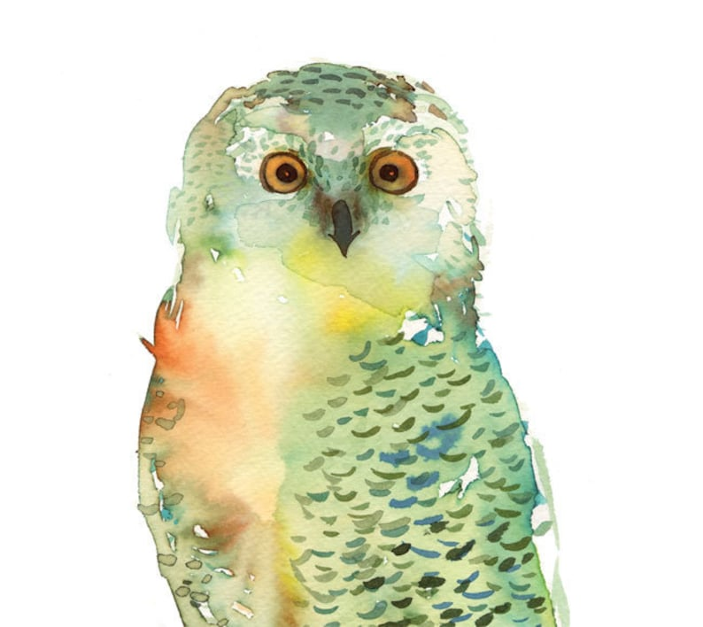 Watercolor Green Owl  painting nature watercolor painting image 0