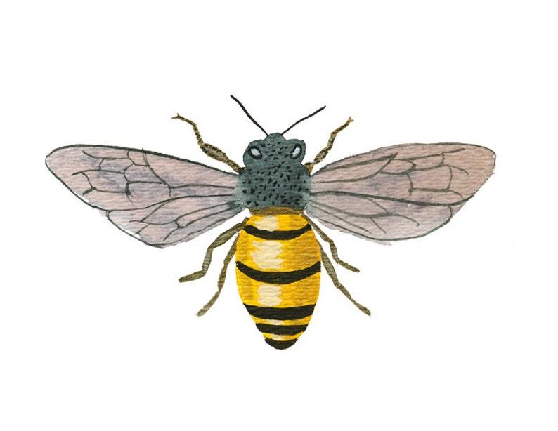 Honey Bee art print  archival fine art image 0