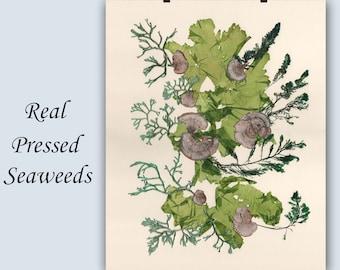 Pressed seaweeds, seaweed pressing, coastal living, beach cottage decor, victorian art, Victorian botanicals