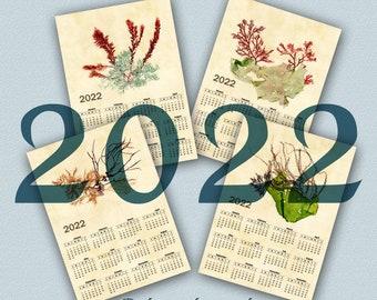 Calendar 2022  Magnet with real pressed Seaweeds, Fridge Magnet OOAK calendar 2022